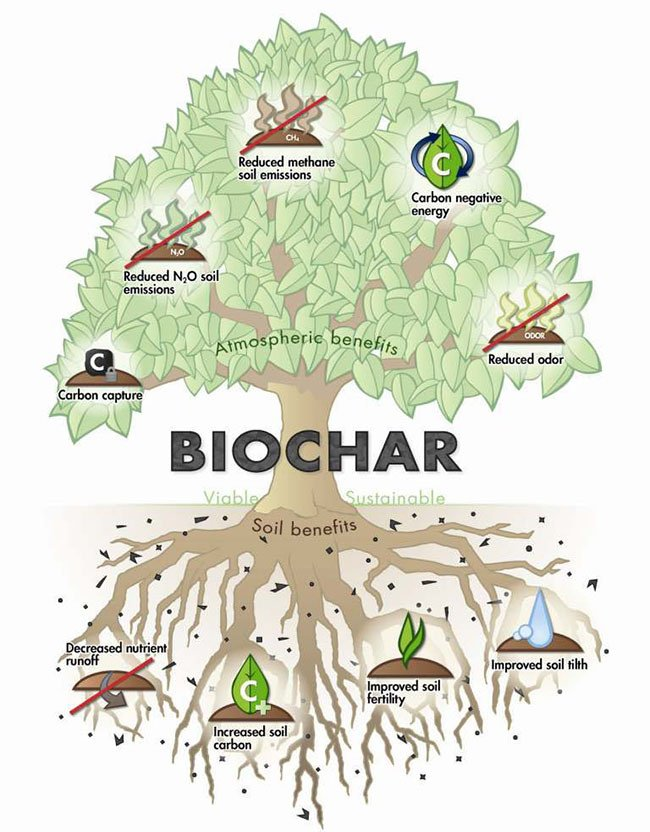 eco-sustainable Biochar